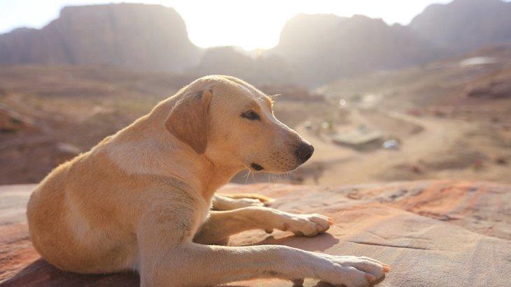 約11500年前に犬と人間が共に狩猟をしていた証拠が明らかに