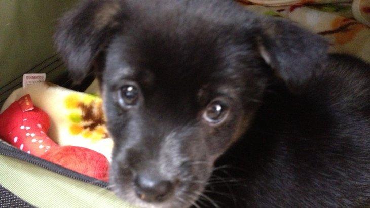 生後間もなく保健所に持ち込まれた保護犬「ニコ」を迎え入れた話
