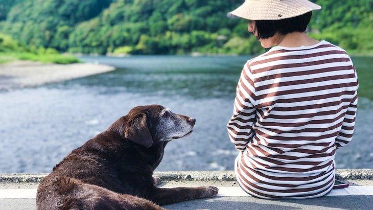 歳を取るにつれて増える犬の『老化行動』7選