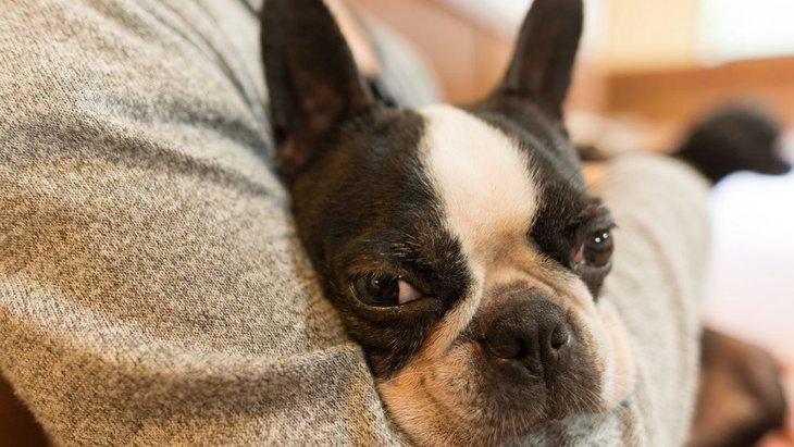 犬を抱っこする時に絶対してはいけない『NG行為』3選!思わぬトラブルやケガにつながるかも…!