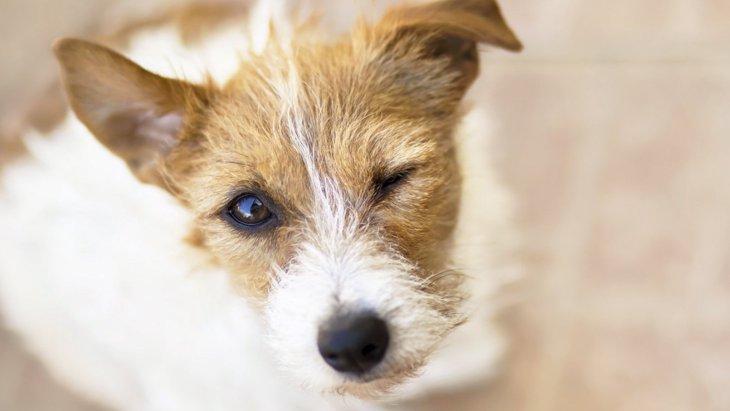 怒りっぽい犬は友好的な犬よりも学習能力が高いという研究結果