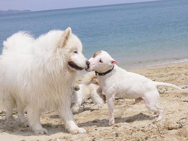 犬のヒートの時期と対処法