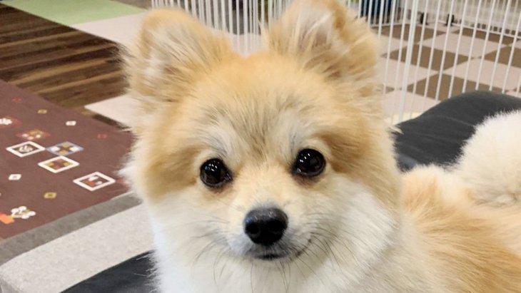 トラウマを抱えた愛犬の気持ちを聞く|Laylaのペットリーディング