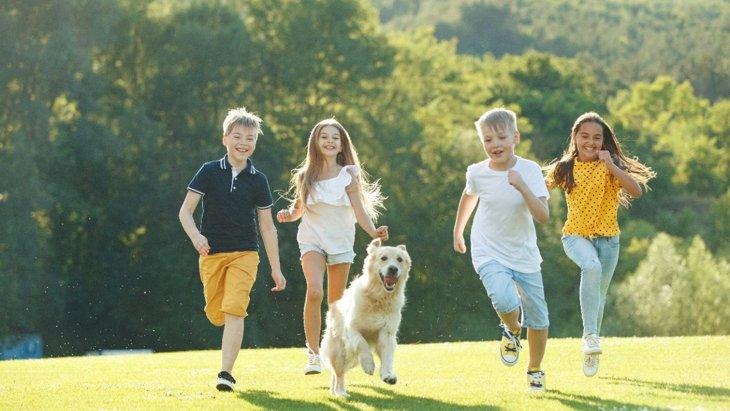 犬と飼い主の『絶対NGな遊び方』5選