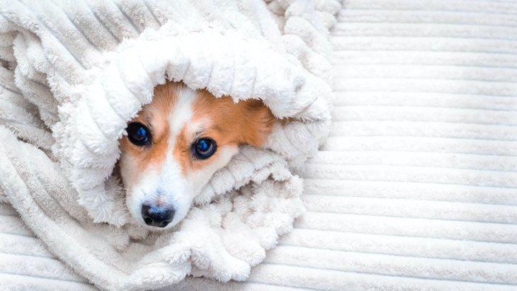 犬の震えが止まらない理由5つ!適切な対処法まで