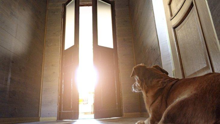 犬が飼い主をお見送りする時に考えている『5つのコト』