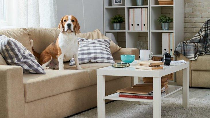 室内で犬を飼うと汚れがちな場所4つ