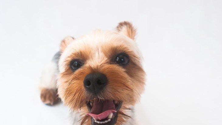 犬の鼻の色が変わる原因と考えられる病気