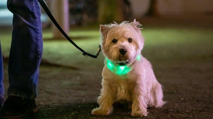 思わぬ事故のリスクが?犬と夜のお散歩で注意したいこと5つ