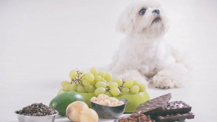 犬に『絶対にNGな食べ物』とは?少量なら大丈夫?