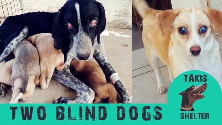 保護された盲目の女子犬2匹。待っていたのは驚きの明るい未来!