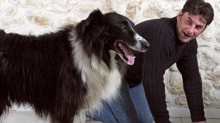 犬は人間の様な行動をとる事が多い?