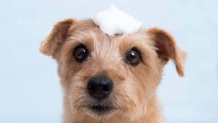 犬の体が臭い時の原因3選!体臭を抑えるにはどうすればいいの?