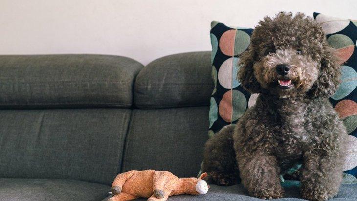 犬をペット不可のマンションで飼うべきではない理由4選