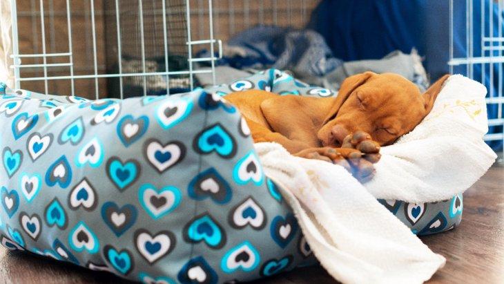 犬がトイレシーツの上で眠っちゃう!3つの理由とやめさせるしつけ方