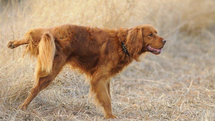 犬が人に『オシッコ』をかけてしまう理由4選!やめさせる方法は?