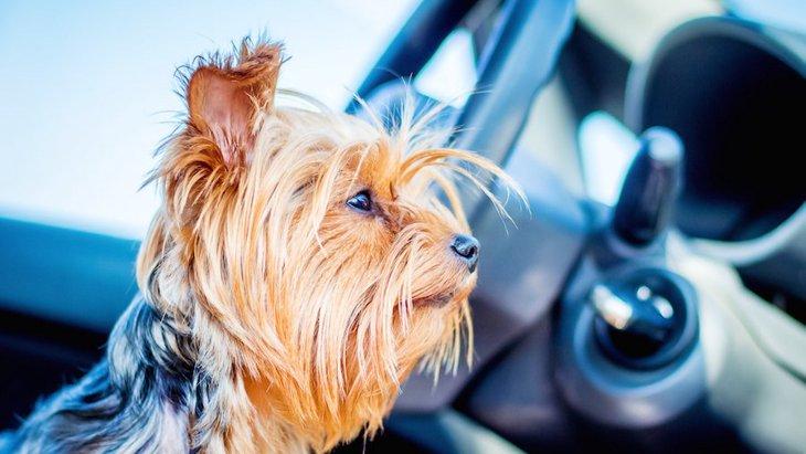 楽しんでる?犬が飼い主との旅行で感じるストレス3つ