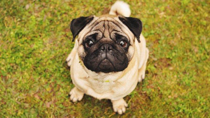 人が大好きと言われている犬種5選