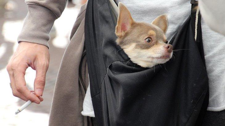 犬に電子タバコは悪影響を及ぼすのか?アイコスは大丈夫?