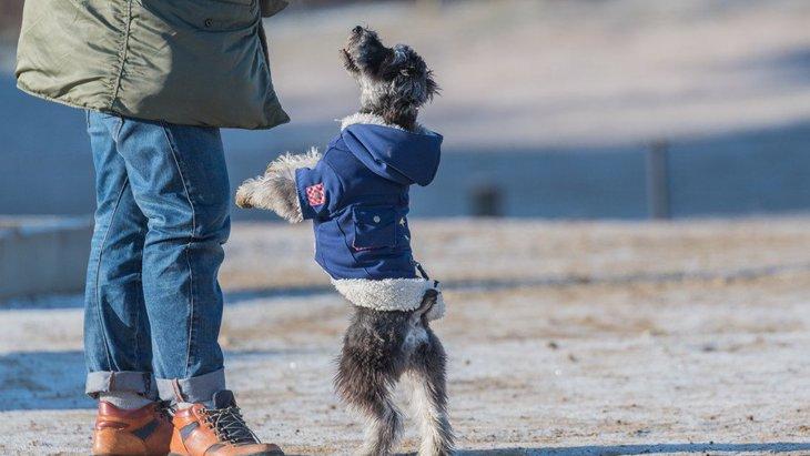犬が二足歩行する時の心理5つ!やめさせた方がいいの?