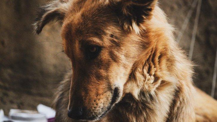 犬も『嘘』をつくことがある?ありがちなシチュエーションと対処法