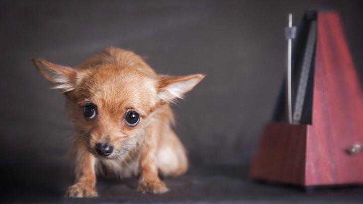 気づかないうちにやってるかも?犬がストレスを感じる飼い主の動き6つ