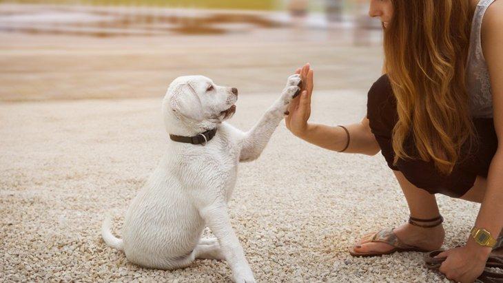 初めて子犬に首輪を付ける時に!慣れてもらう2つの方法