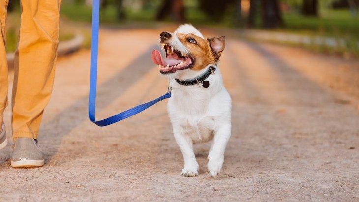 犬の散歩中にやるべきではないNG行為6選