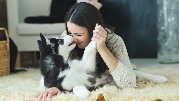 犬が飼い主をずっと舐め続ける心理4つ!やめてもらう方法まで