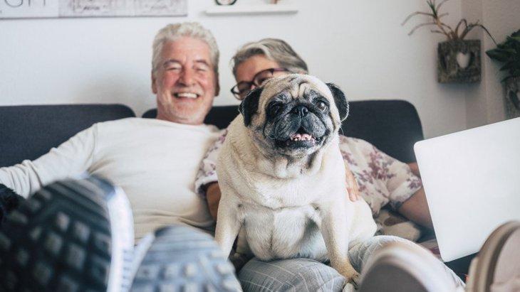 高齢者が子犬を飼うメリット・デメリット