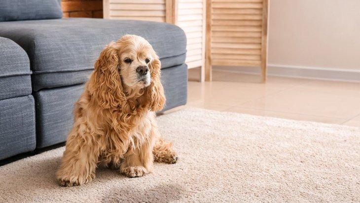 犬がおしっこを漏らしてしまう原因5選