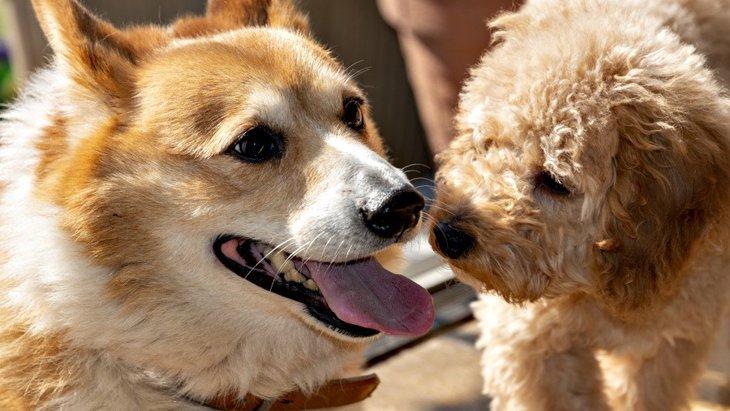 【あるある?】犬を飼っている人同士で起こりやすいトラブル4選