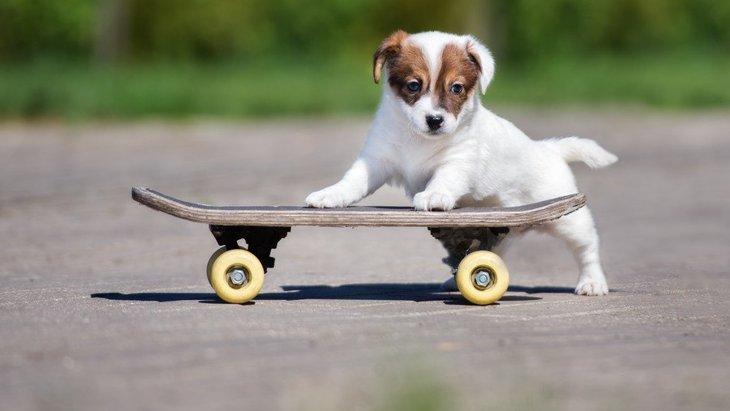 ついやりがち!犬に強要すべきではない3つのこと