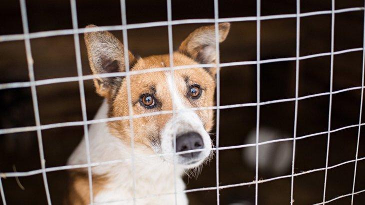 『保護犬を飼うメリット』4選!注意すべきことからコツまで解説