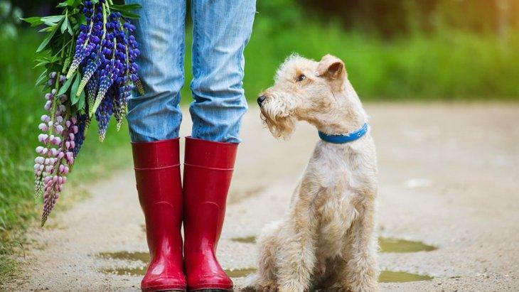 雨の日に犬と散歩した後、どんなケアをするのがいいの?