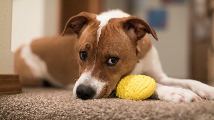 犬の機嫌が悪い時に絶対してはいけないNG行為4選