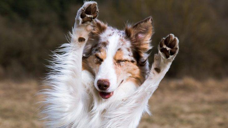 悪い印象を与えてしまう愛犬家の共通点3選