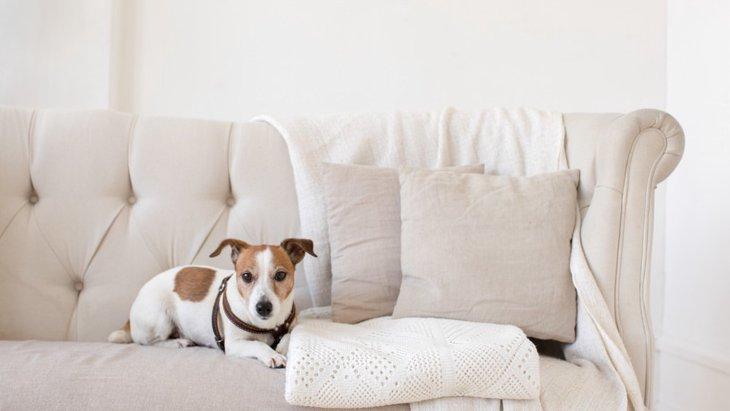 犬に消臭剤・芳香剤は有害?ペットにも安心なおすすめ商品まで