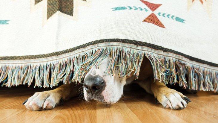 『怖がりな犬』のために飼い主がするべき2つのこと
