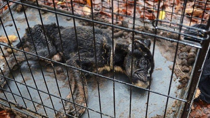 【感動】「救いたい!」医師の諦めない心が救った飼育放棄された犬
