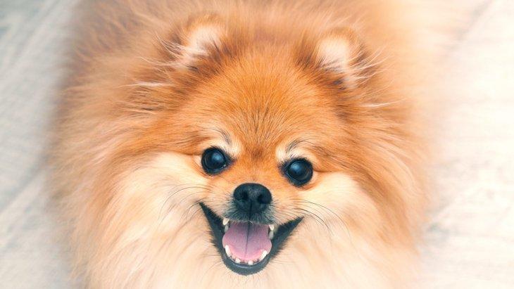 犬があなたを信頼している時に見せる4つの愛情表現