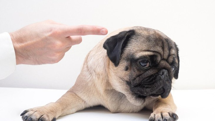 犬が『嫌な気持ち』になっている時にする仕草や行動10選
