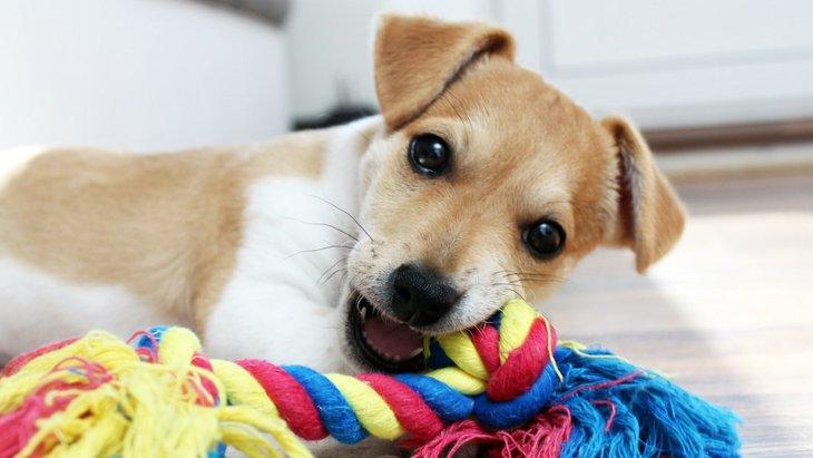 犬が破壊しがちなモノ4選!やめさせるにはどうするべき?