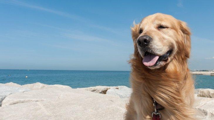 犬と行く沖縄旅行!おすすめ観光スポットから一緒に泊まれる宿まで