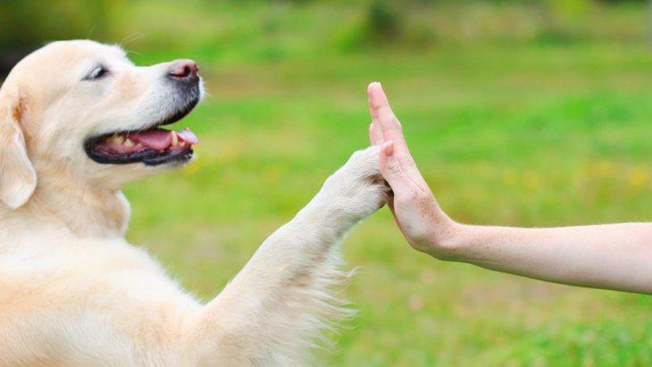 やはり犬は人間にとって最良の友だった