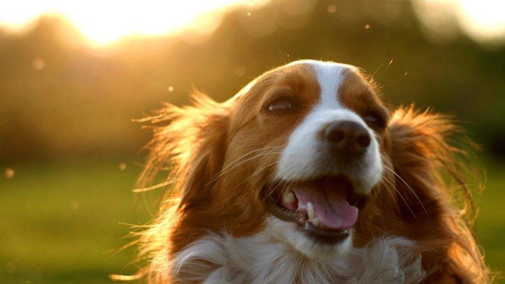犬を看取るとき、後悔を少なくするためにできる3つのこと