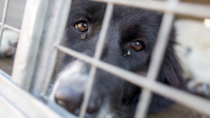 無責任な犬の飼い主の特徴5選
