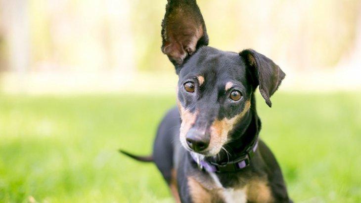 犬に『あだ名』を使いすぎるべきではない理由3選