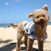 愛犬と旅行してわかった動物検疫とフライト事情