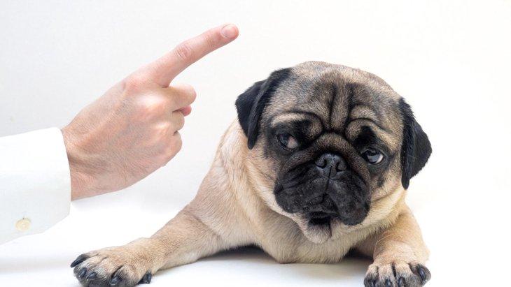 伝わってないかも?犬に『気持ちを伝える』時のNG行為4選